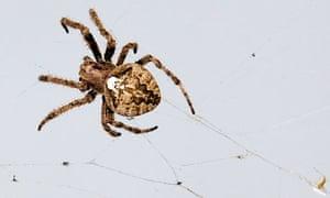 A spider crawls on its web at the media village ahead of the IAAF Daegu 2011 World Championship