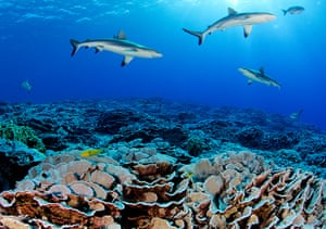 Pitcairn: The pristine coral reef of Ducie Atoll