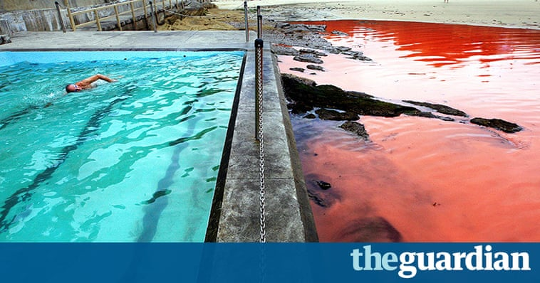 Red Algae Closes Beaches In Sydney In Pictures Australia News The Guardian