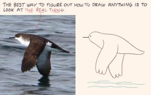 Luke Pearson How to Draw: Luke Pearson's How to Draw... birds 9