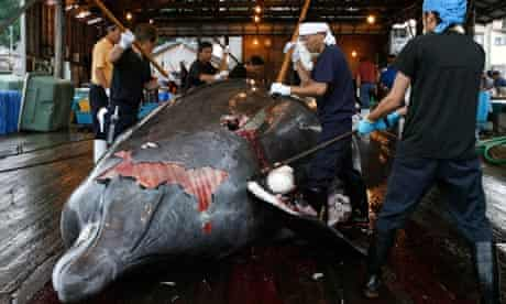 Workers butcher a whale