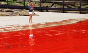 A mother and her daughter assess the red algal bloom in the water at Clovelly beach in Sydney