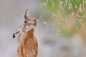 2012 GDT : European Wildlife Photographer