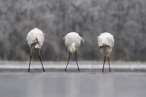 2012 GDT : Back front back , European Wildlife Photographer