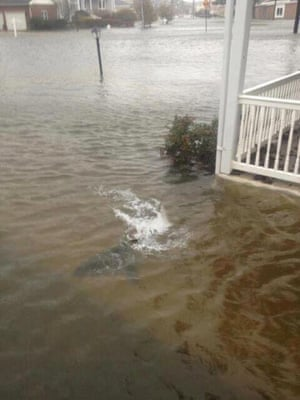 Fake image of shark in front yard