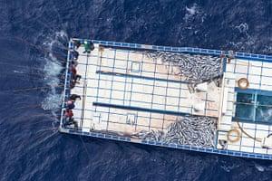 Sustainable Tuna fishing: Pole anf Line Fishing in Maldives