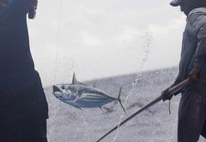 Sustainable Tuna fishing: Pole & Line Fishing, Maldives.