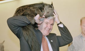 newt gingrich zoo