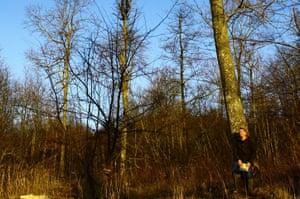 Ash tree disease: Denmark, Gribskov forest