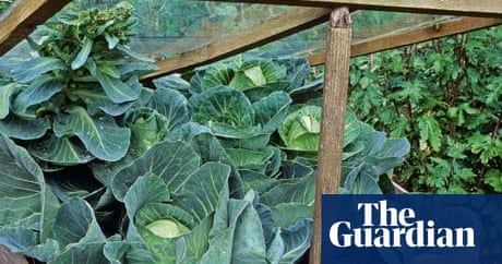 Gardens: cold frames | Life and style | The Guardian