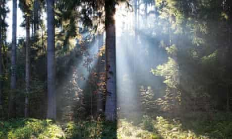 Beams of sunlight in forest