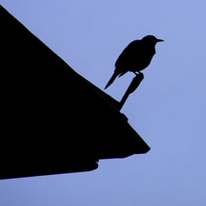 Green Shoots: Urban Birds