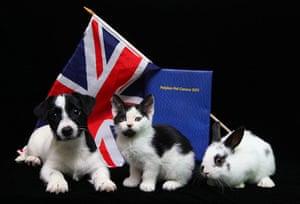 UK census: Pet Census - 2011