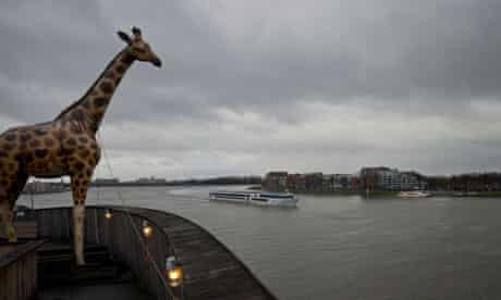 A life-size replica of a giraffe overlooks Merwede river from a full scale replica of Noah's ark