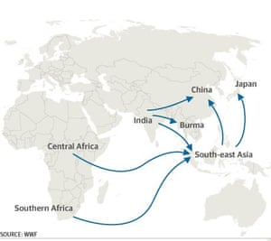 The main routes for organised criminal trade in wildlife.