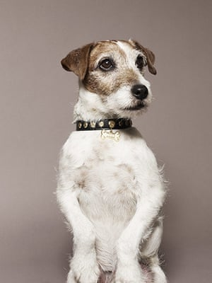 Observer Photography: Uggie
