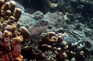 Week in wildlife: INDONESIA-JAKARTA-SEA