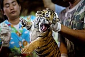 Week in wildlife: Handout photo obtained on December 12, 2