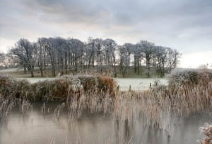 Week in wildlife: Frost covers the fields and trees around Arundel, West Sussex