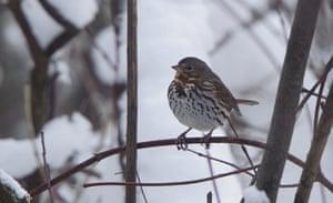 Week in wildlife: This picture taken on December 9, 2012 i