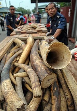 Week in wildlife: Elephant tusks seized in Malaysia