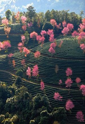Week in wildlife: CHINA-YUNNAN-DALI-NANJIAN-SCENERY(CN)