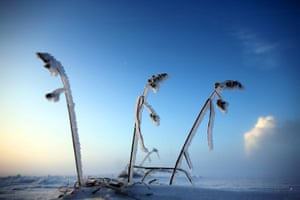 Week in wildlife: Grass is covered with frost near Bergheim
