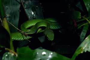 Singing Frog And Walking Catfish Among 126 New Species