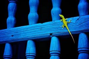 BT 2012 gallery winners: lizard