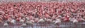 BBC Africa : Flamingos on a lake in East Africa