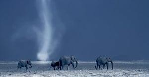 BBC Africa : Family of elephants on the Savannah