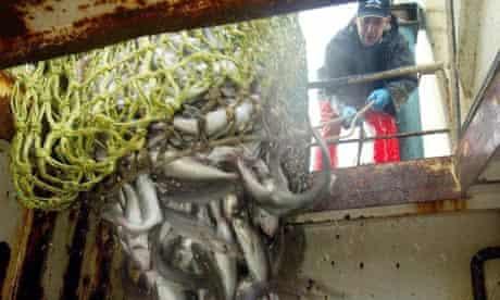 Sea fish quotas