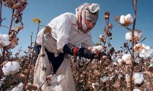 A woman picks cotton in Uzbekistan