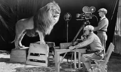 Filming lion