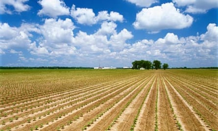 A field of cotton in Mississippi, USA