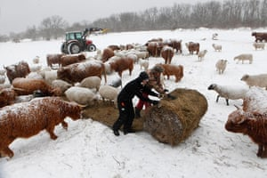 Living in a freezer: The Koppels feed sheep and cattle