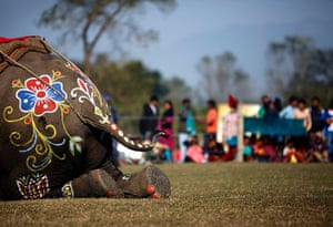 24 hours in pictures: Decorations on an elephant are seen during an elephant beauty contest