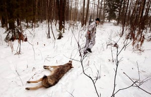 24 hours in pictures: A hunter drags a dead wolf  through a forest in Belarus