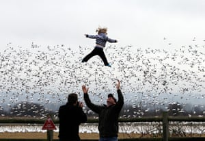 24 hours in pictures: snow geese take flight in the Skagit Valley