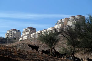 E1 project: Goats graze near the Jewish settlement of Maale Adumim near Jerusalem