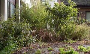Gardening blog Neglected garden