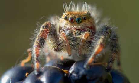 space travel spider dies