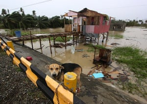 Typhoon Bopha: A dog is chained near a damaged house in Compostela Valley