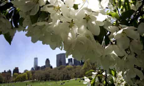 Flowers blossoming in Central Park, New york