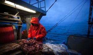 Hard graft: Jon Planes Jr. prepares bait to lure sharks and halibut, aboard the Ocean Sunset commercial fishing boat in the Pacific Ocean off of Ucluelet, British Columbia.