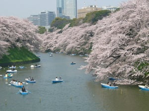 Healthiest cities: Tokyo cherry blossom moat