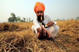 Fires in Penjab: Clearing of rice fields after harvest