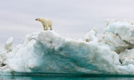 Polar bear standing atop floating iceberg