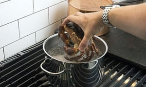 Crab dropped into a pan of boiling water