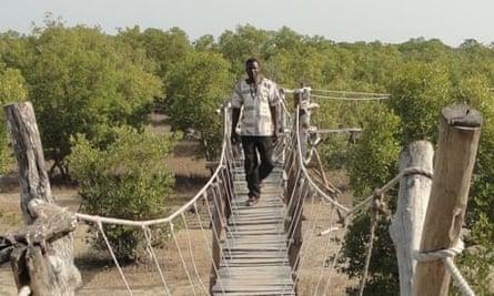 kenya forest conservation
